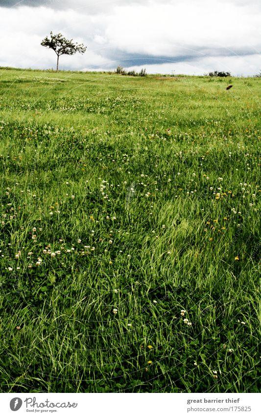 Grüne Wüste Natur Baum grün Sommer Ferien & Urlaub & Reisen Wolken Erholung Wiese Gras Glück träumen Landschaft hell warten Umwelt Horizont