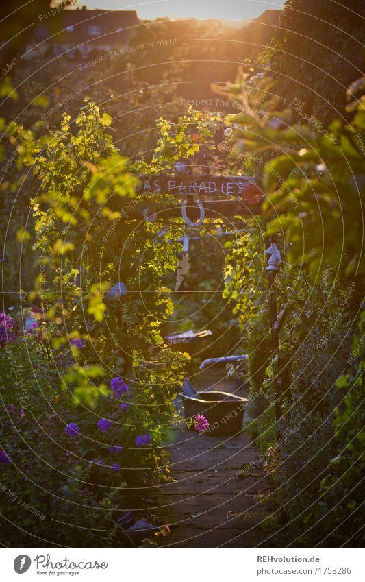 Das Paradies Umwelt Natur Pflanze Blume Sträucher Garten Wege & Pfade Blühend Wachstum nachhaltig schön gold grün Glück Zufriedenheit Lebensfreude Kitsch Wort