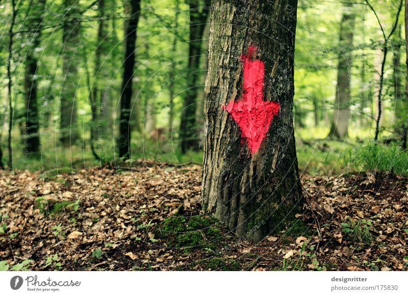 Cut Here! Natur Baum Pflanze Wald Landschaft Graffiti Umwelt Schilder & Markierungen Ordnung Boden einfach Pfeil Zeichen unten Richtung Urwald