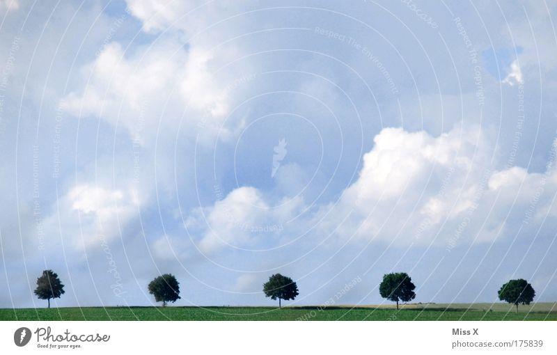 sechs kleine Ahornbäume waren hübsch und fein..... Natur schön Baum Ferien & Urlaub & Reisen Wolken Straße Wiese Garten Wege & Pfade Park Landschaft Wind