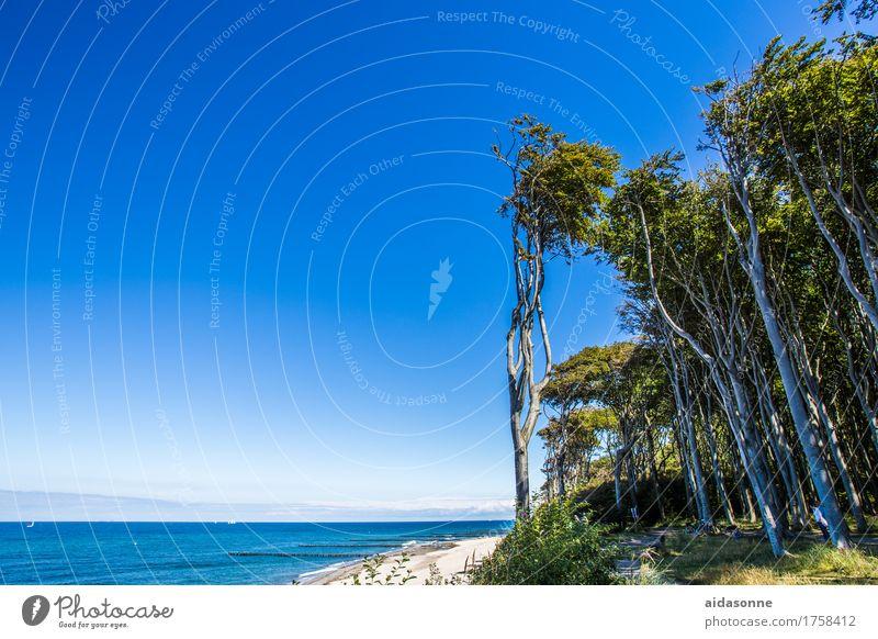 gespensterwald Sommer Wasser Landschaft Einsamkeit ruhig Wald Gefühle Zufriedenheit Ostsee Gelassenheit Wolkenloser Himmel friedlich achtsam