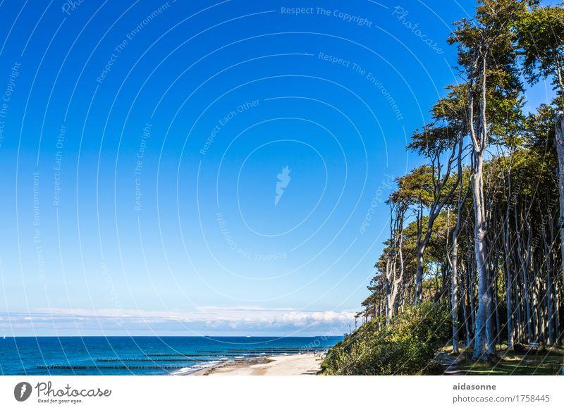 Nienhagen Natur Sommer Wasser Landschaft ruhig Strand Wald Küste Zufriedenheit Gelassenheit Vorsicht geduldig friedlich achtsam Verlässlichkeit