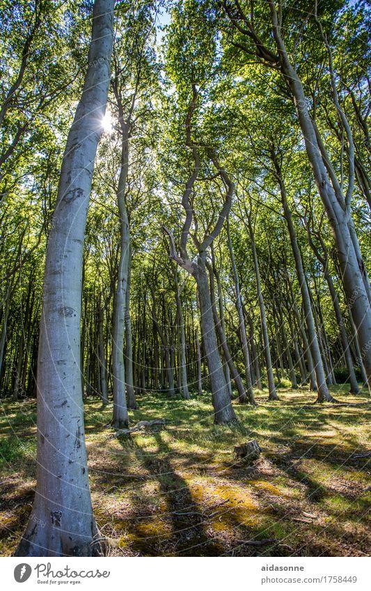 Gespensterwald Natur Landschaft Pflanze Sonnenlicht Sommer Wald Ostsee Zufriedenheit Lebensfreude achtsam Freundlichkeit Verlässlichkeit Pünktlichkeit Vorsicht