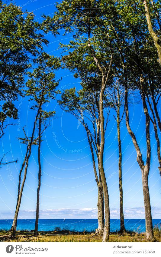 Gespensterwald Pflanze blau Sommer Wasser Landschaft ruhig Strand Schönes Wetter Ostsee Gelassenheit Vorsicht achtsam