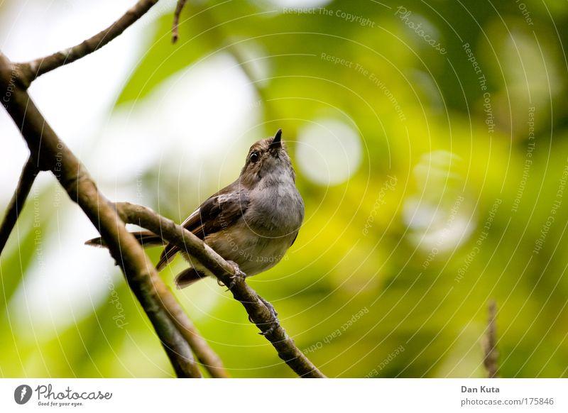Vogelperspektive Natur Pflanze Sonne Tier Spielen klein fliegen Vogel sitzen Fröhlichkeit ästhetisch warten Flügel Schönes Wetter Freundlichkeit Sauberkeit
