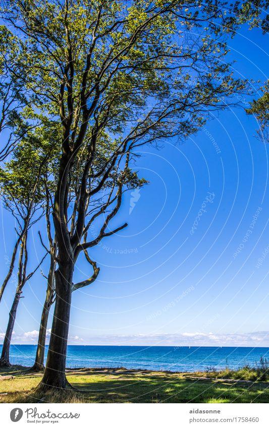 Gespensterwald Landschaft Wasser Wolkenloser Himmel Schönes Wetter Wald Ostsee Zufriedenheit friedlich achtsam Verlässlichkeit Vorsicht Gelassenheit geduldig