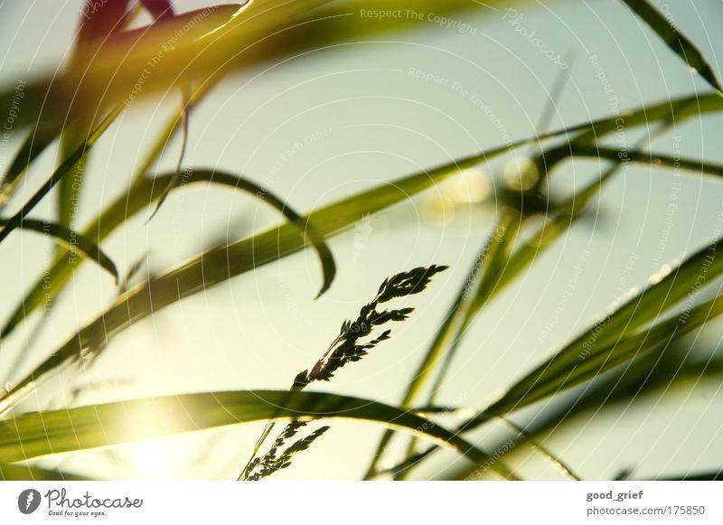 laying back, head in the grass Natur Pflanze Sonne Sommer Ferien & Urlaub & Reisen Tier Erholung Wiese Umwelt Landschaft Gras Wärme Strahlung Schönes Wetter Sonnenstrahlen