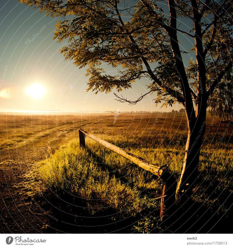 Koppel Umwelt Natur Landschaft Pflanze Wolkenloser Himmel Horizont Schönes Wetter Baum Gras Sträucher Wiese Weide Barriere Holz glänzend leuchten Unendlichkeit
