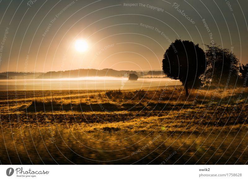 Land der Frühaufsteher Umwelt Natur Landschaft Pflanze Luft Wolkenloser Himmel Horizont Schönes Wetter Nebel Wärme Baum Gras Sträucher Wiese Feld glänzend