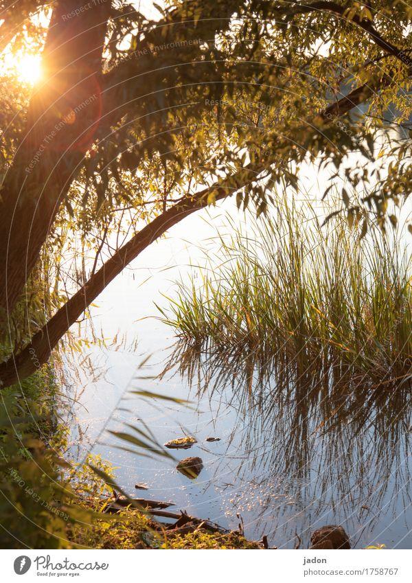 sommerabendstimmung. Sinnesorgane Erholung ruhig Meditation Ausflug Umwelt Natur Landschaft Pflanze Wasser Sonnenlicht Schönes Wetter Baum Gras Seeufer Fluss