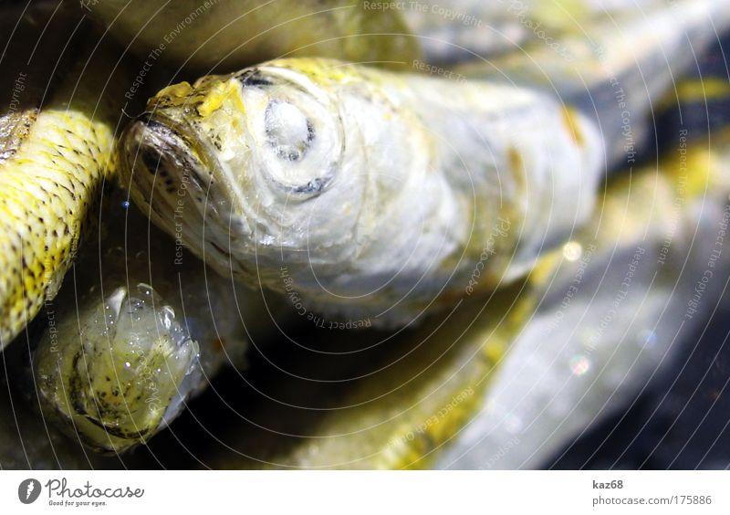 freitags Meer Tier Auge Tod Ernährung Lebensmittel Eis frisch Fisch Tiergruppe gefroren Appetit & Hunger genießen lecker Angeln