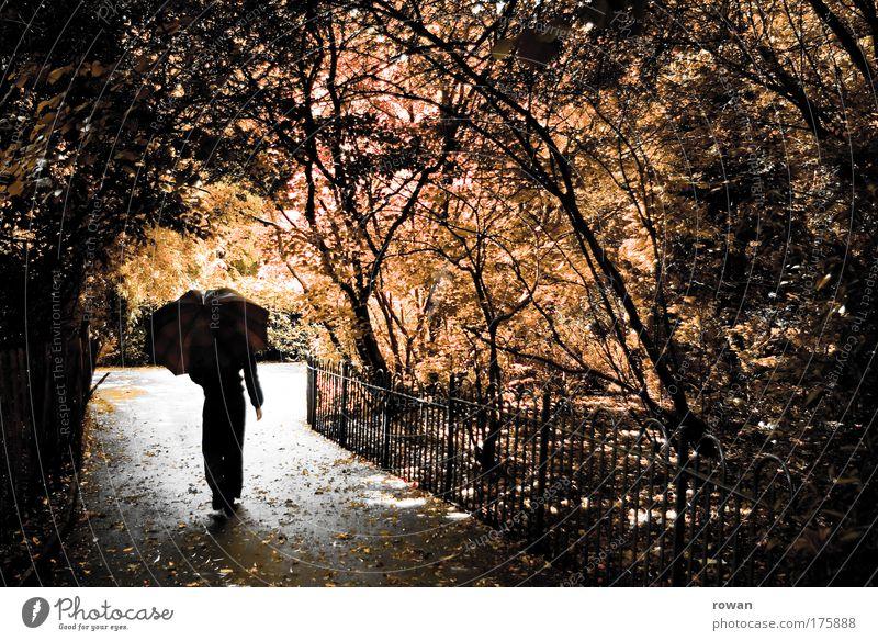 juliregen Mensch Frau Natur Baum Blume Blatt Erwachsene Wald Herbst dunkel kalt Wege & Pfade Garten Traurigkeit träumen Park