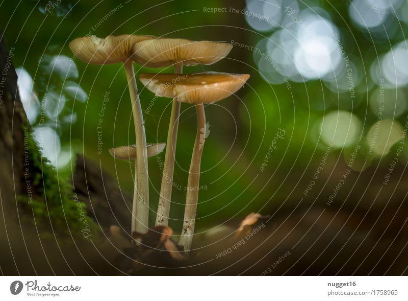 Herbstzeit, Pilzzeit ... Natur Pflanze Sommer grün Wald Umwelt gelb Essen natürlich braun Park Idylle ästhetisch genießen lecker
