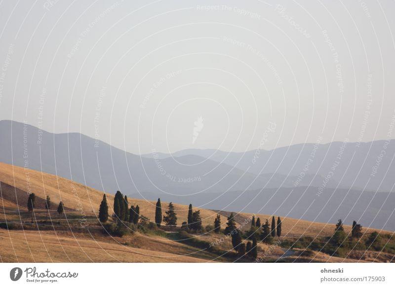Toskana Gedeckte Farben Außenaufnahme Menschenleer Abend Panorama (Aussicht) Natur Landschaft Pflanze Himmel Horizont Baum Feld Hügel Berge u. Gebirge Volterra