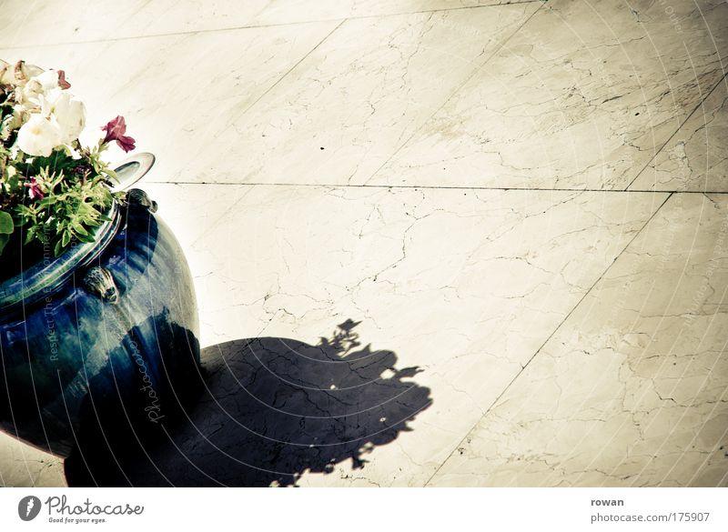 terrassenzierde schön Sonne Blume Pflanze Sommer Erholung Garten Glück Stein Wärme hell glänzend Wachstum Häusliches Leben heiß Blühend