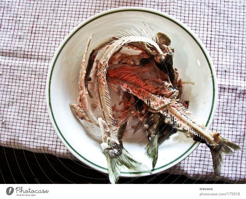 grün rot Lebensmittel Fisch Müll Ekel Schalen & Schüsseln Rest Fisch Fischgräte