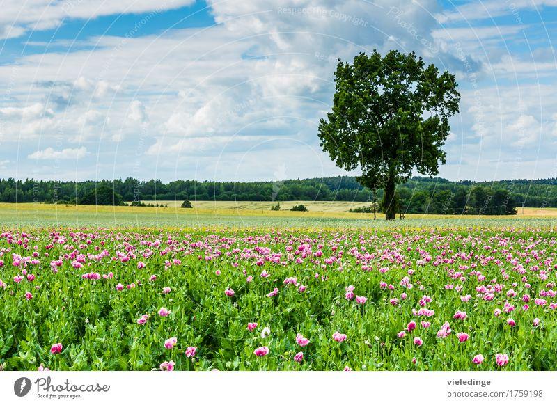 Mohnfeld am Wegesrand Ausflug Sommer Natur Landschaft Pflanze Wolken Frühling Schönes Wetter Baum Blume Blüte Nutzpflanze Wiese Feld Blühend violett Blaumohn