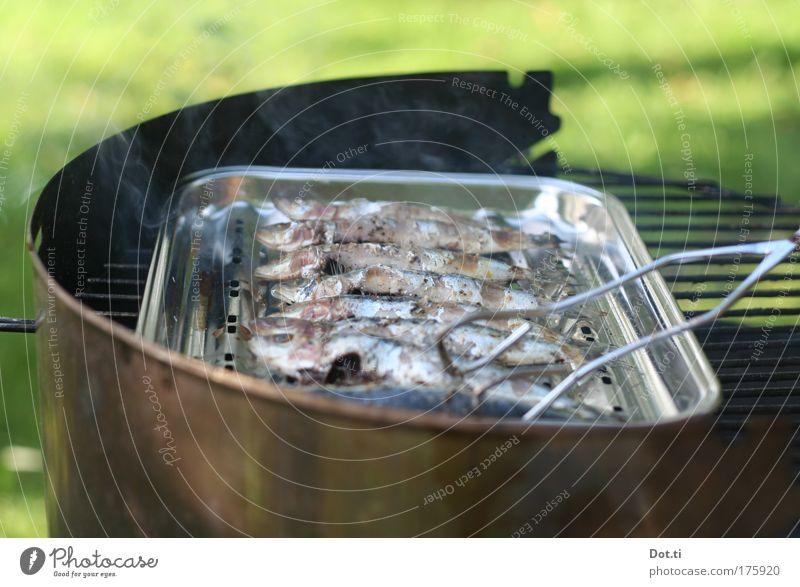 Sardinade Farbfoto Außenaufnahme Menschenleer Textfreiraum oben Textfreiraum unten Tag Kontrast Lebensmittel Fisch Ernährung Freizeit & Hobby heiß Grillen