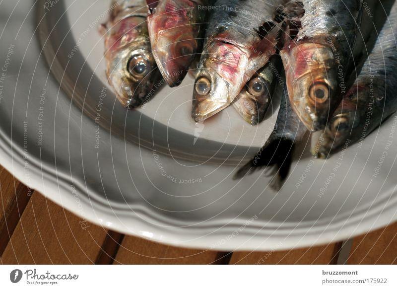 Fisch vom Kopf her Sardinen Teller Lebensmittel Blut Geschirr Glasur AugenSchwanz Schuppen Flosse Blick Tod Ernährung Angeln