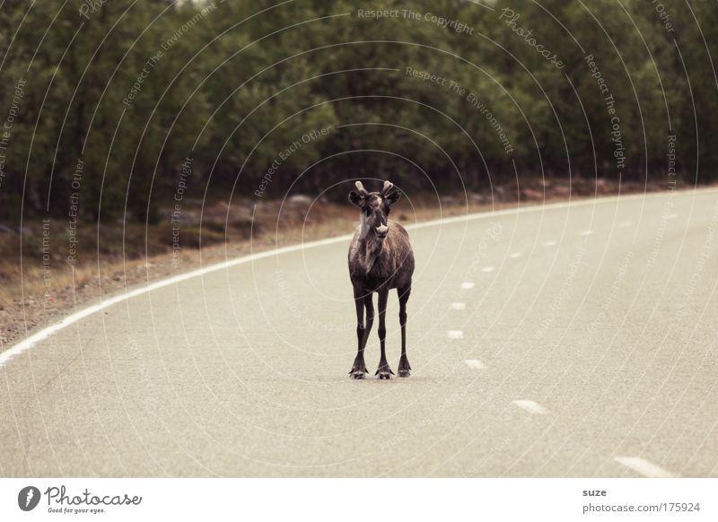 Da steh ich nun ... Natur Pflanze Baum Tier Umwelt Tierjunges Straße Verkehr Wildtier warten stehen authentisch bedrohlich niedlich Sicherheit Neugier