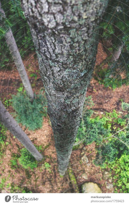 baumstamm von oben nach unten Kind Ferien & Urlaub & Reisen Baum Erholung Ferne Wald Schule Freiheit Tourismus Freizeit & Hobby Zufriedenheit Ausflug wandern