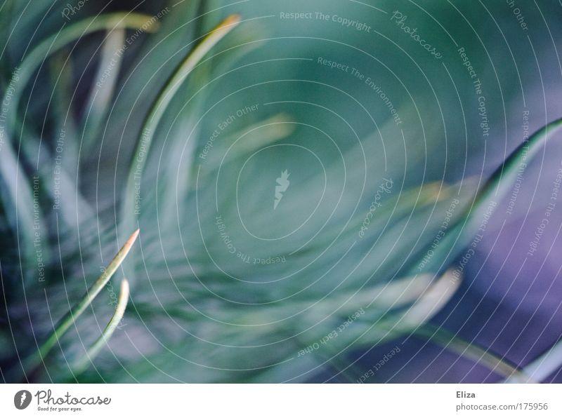kuddelmuddel Natur schön Pflanze Hintergrundbild wild ästhetisch Sträucher fantastisch Dynamik durcheinander exotisch traumhaft