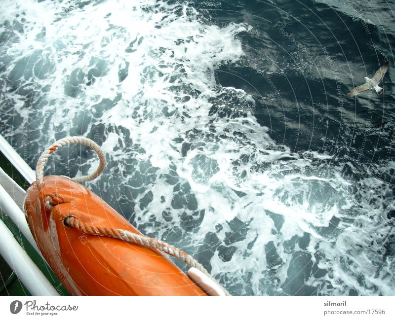 Fahrtwind I Fähre Wasserfahrzeug Wellen Meer Rettungsring Möwe Wellengang Sturm Leidenschaft Europa