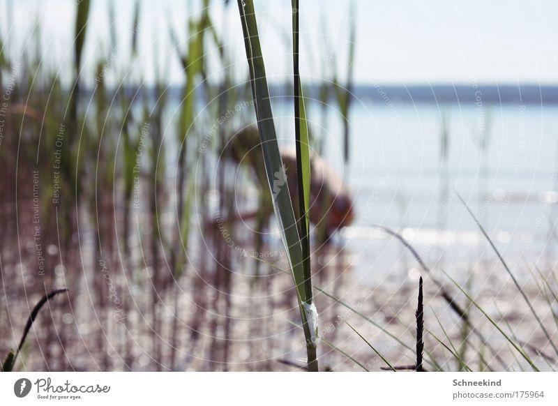 Im Hintergrund Mensch Natur grün Pflanze Sommer Einsamkeit ruhig Umwelt Landschaft Gras Küste ästhetisch beobachten Seeufer entdecken Flussufer