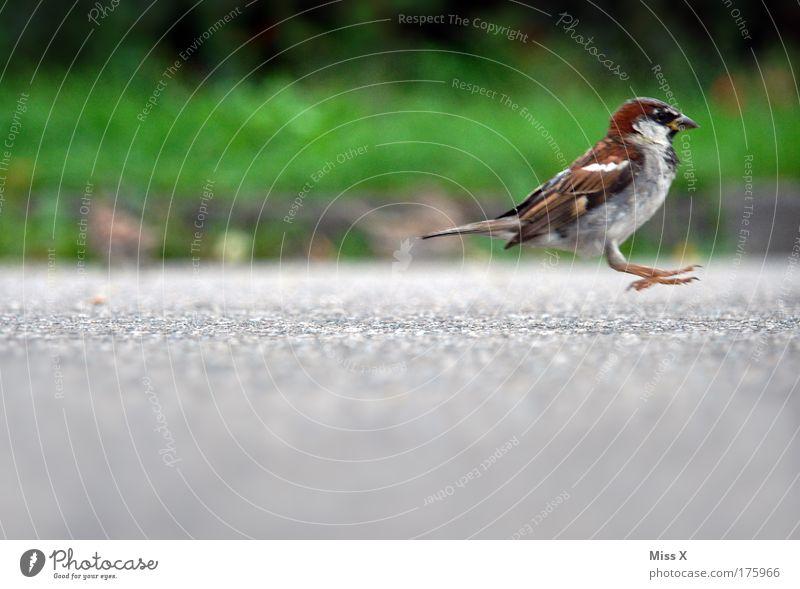 ich mag doch nicht aufs Foto Natur Freude Tier Straße Gras Garten Wege & Pfade Park Vogel Umwelt Fröhlichkeit Wildtier niedlich Flucht Verkehr Fußgänger