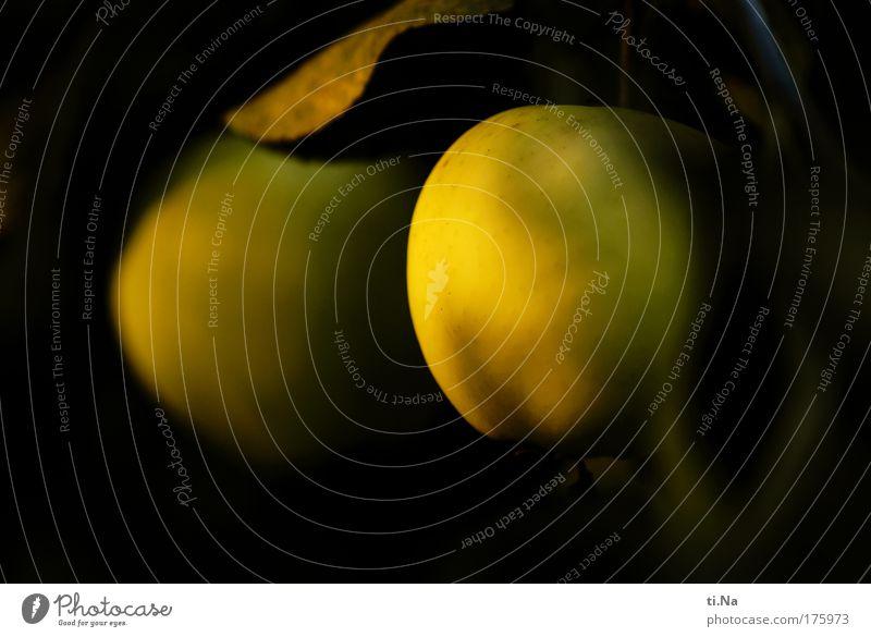 Apfelzeit Natur Baum Pflanze Sommer schwarz Umwelt gelb Leben Herbst Lebensmittel Gesundheit Zufriedenheit Frucht gold Wachstum Apfel
