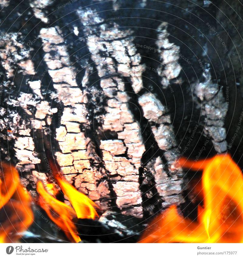 Knochen & Fleisch weiß rot Freude schwarz gelb Feuer Freizeit & Hobby Grillen Baumstamm Urelemente Flamme Brand Feuerstelle Brandasche Glut