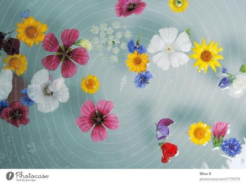 Meerjungfrau im Blumenmeer Wasser schön Pflanze ruhig Erholung Blüte Gesundheit Schwimmen & Baden natürlich mehrfarbig Vogelperspektive Wellness Badewanne