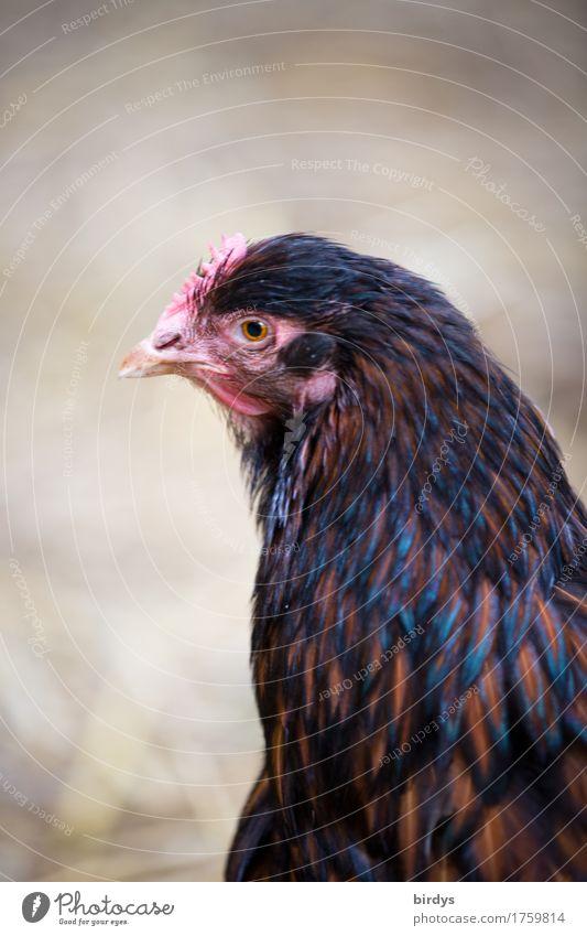 Mathilda O. Natur Tier Leben feminin Gesundheit Zufriedenheit ästhetisch beobachten Freundlichkeit Neugier Landwirtschaft Gelassenheit Bioprodukte positiv