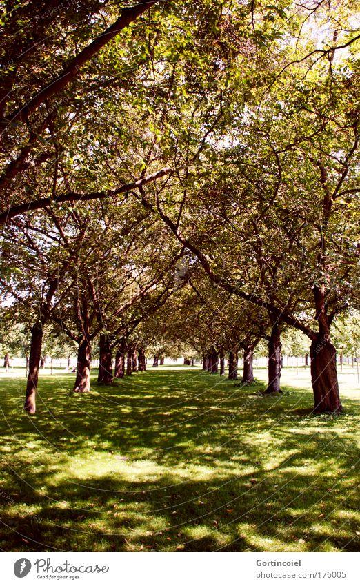 Allee Natur schön Baum grün Sommer Blatt gelb Wald Wiese Garten Wege & Pfade Park Landschaft braun gehen Umwelt