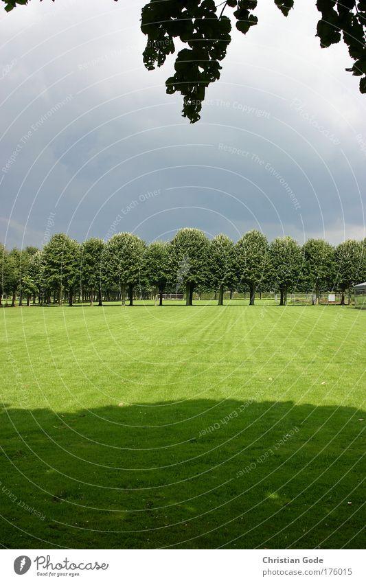 Wald und Wiesen Fotografie Natur Himmel Baum grün blau Pflanze Blatt Wolken Tier Gras Park Regen Landschaft Wetter