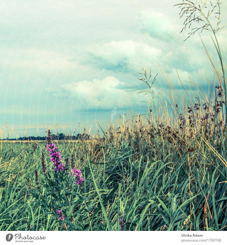 Natur im Teufelsmoor Himmel Ferien & Urlaub & Reisen Pflanze Sommer Landschaft Wolken ruhig Umwelt Innenarchitektur Wiese Gras Freiheit Deutschland Tourismus