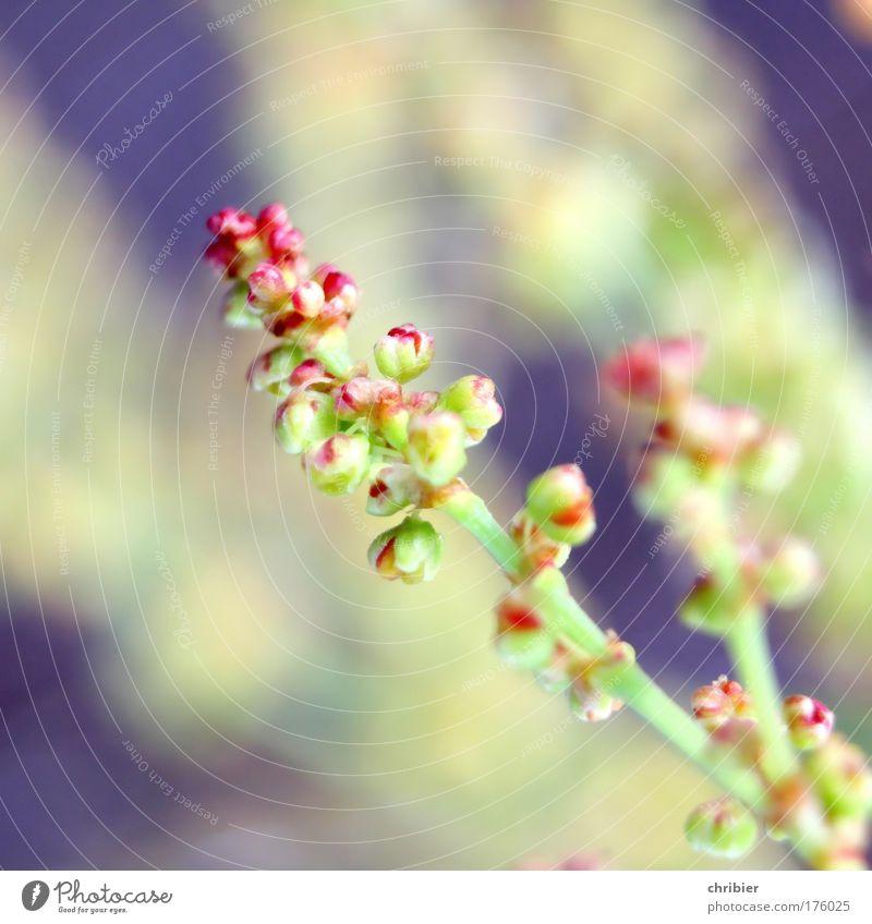 Unerwünschtes Kraut Farbfoto Nahaufnahme Makroaufnahme Schwache Tiefenschärfe Umwelt Natur Pflanze Sommer Gras Wildpflanze Feld berühren Blühend verblüht