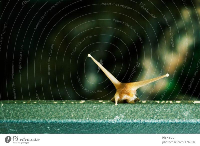 Grenzen überwinden Natur Freude Tier Glück braun Umwelt Erfolg verrückt Unendlichkeit natürlich Neugier niedlich bizarr Schnecke Optimismus langsam