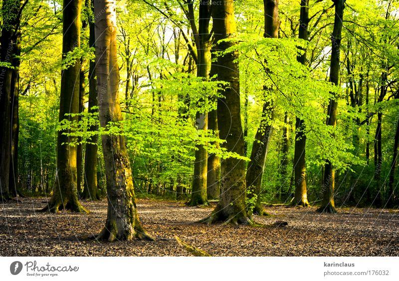 heller Sommerwald Umwelt Natur Landschaft Pflanze Sonnenlicht Klima Baum Sträucher Wald Holz natürlich schön braun gelb grün Frühlingsgefühle Tatkraft elegant