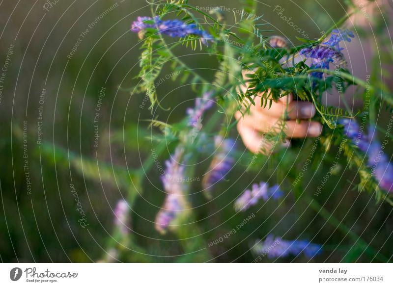 Unkraut mehrfarbig Außenaufnahme Nahaufnahme Textfreiraum links Unschärfe Schwache Tiefenschärfe Arme Hand Finger Umwelt Pflanze Blume Gras Duft einfach schön