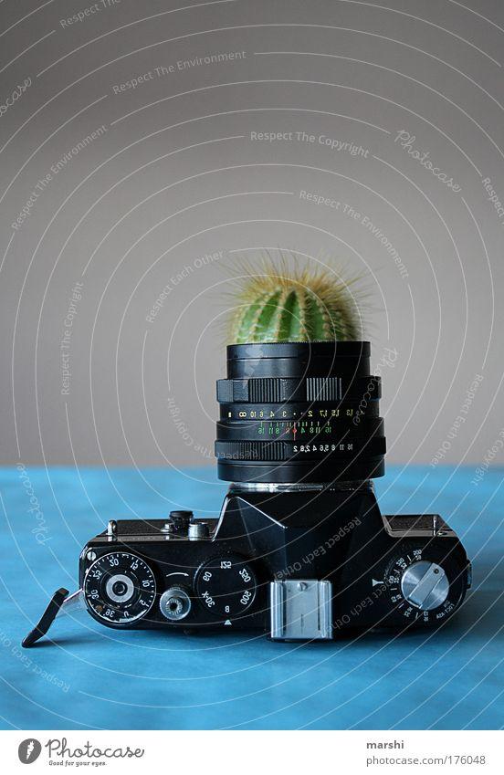 analoges Gewächs alt grün blau Pflanze Wachstum Freizeit & Hobby Fotokamera Beruf analog Fotografieren Vase Kaktus Kunstwerk Objektiv