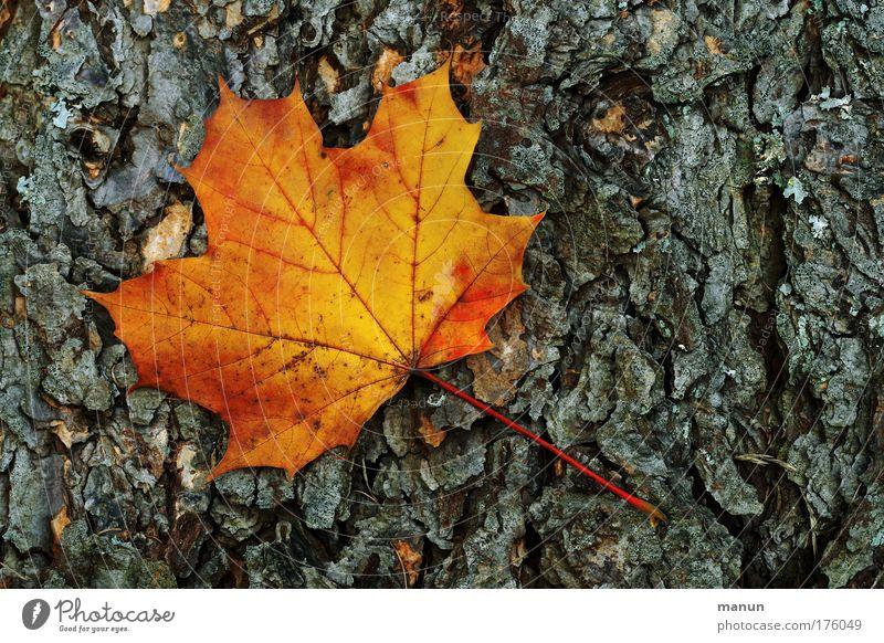Abfall Natur alt Baum Farbe Blatt schwarz ruhig Umwelt gelb Herbst grau Traurigkeit Park Zeit gold natürlich