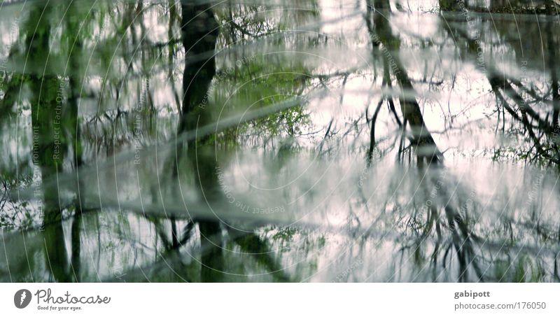 BB_das wetter im april (2) Baum Straße dunkel kalt grau Regen Wetter Wind glänzend warten nass Wassertropfen trist Trauer Ast Asphalt