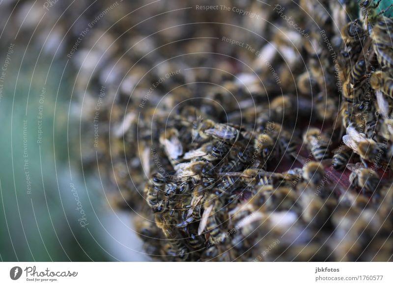 Wir sind das Volk! Natur Gesunde Ernährung Tier Freude Umwelt Leben Glück Lebensmittel Freizeit & Hobby Zufriedenheit Flügel Lebensfreude Völker Süßwaren Biene