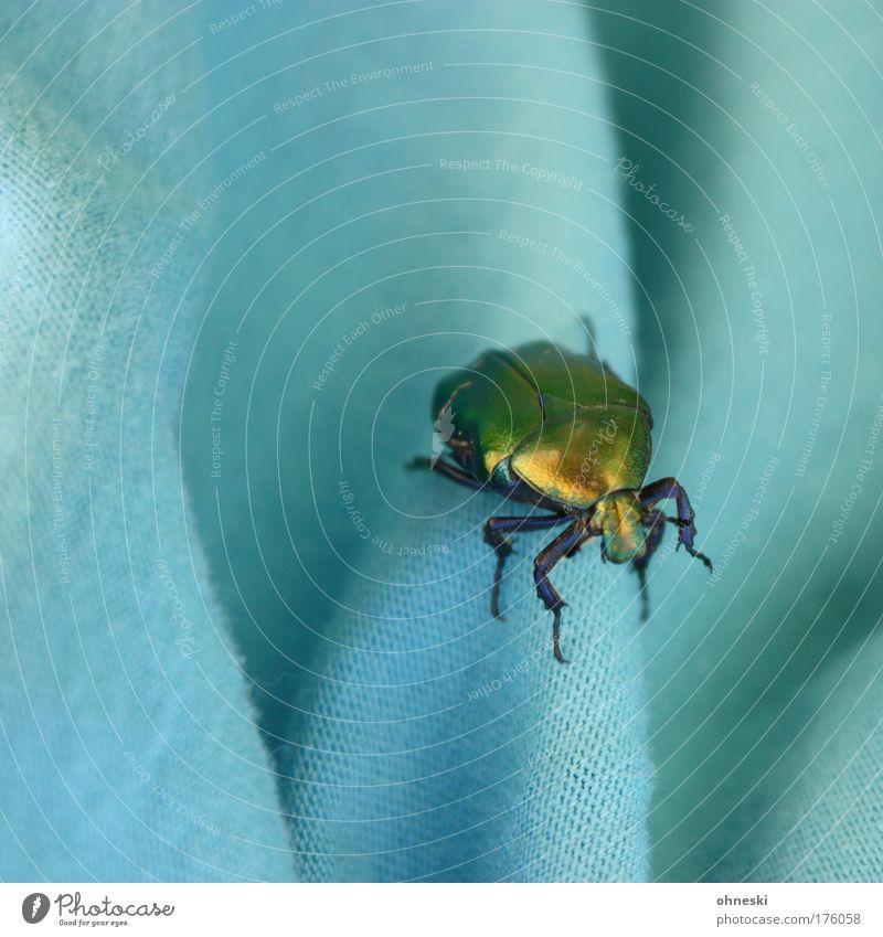 Discokäfer Natur Tier verrückt Wildtier türkis Käfer Textilien schillernd