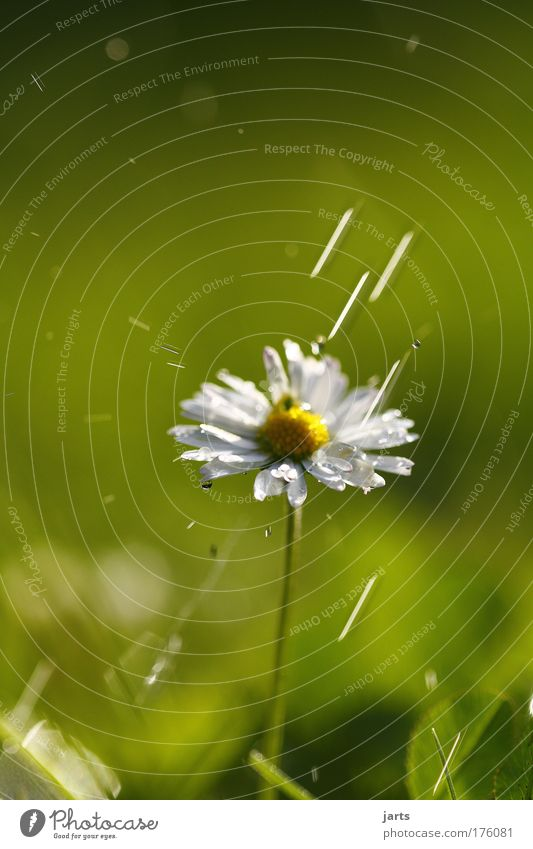 blitschblatsch Natur Wasser Blume Pflanze Sommer Leben Wiese Blüte Gras Regen Wassertropfen nass frisch Klima natürlich Schönes Wetter