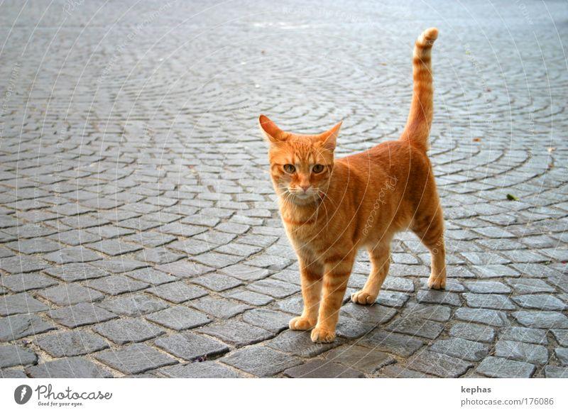 . .__/ Katze Stadt Platz Tier Haustier Fell 1 Freundlichkeit kuschlig niedlich weich gelb gold rot Farbfoto Außenaufnahme Textfreiraum links Textfreiraum oben