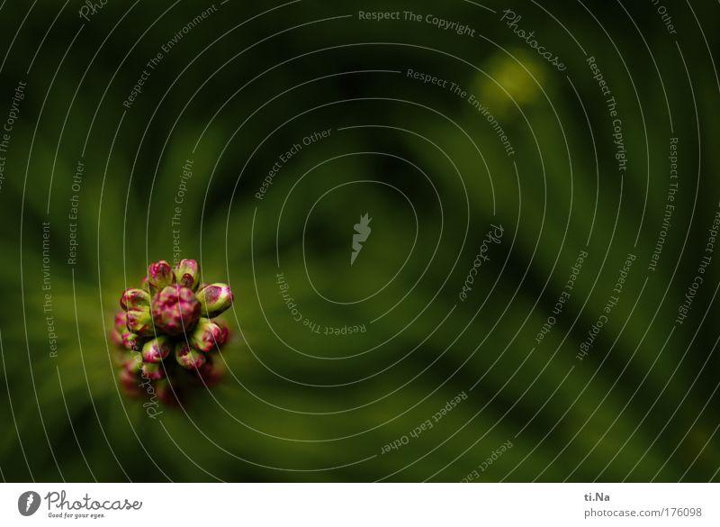 ne Pracht... Natur schön grün Pflanze Leben Gefühle Blüte Landschaft Stimmung Kraft rosa Umwelt hoch Wachstum Tourismus Sträucher