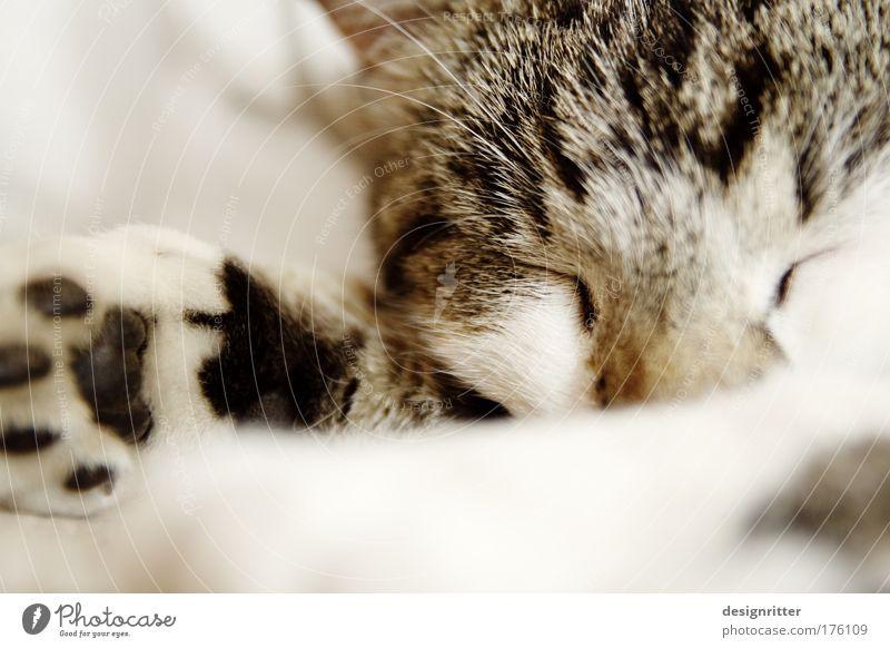 rrrrr-rrrrr-rrrrr-rrrrr-rrrrr … Katze schön Tier Haus ruhig Erholung Wärme Haare & Frisuren Zufriedenheit wild schlafen Sicherheit niedlich weich Fell Sofa