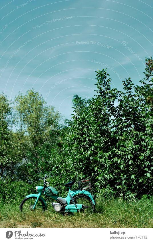 picknick Farbfoto Außenaufnahme Menschenleer Textfreiraum oben Tag Schatten Kontrast Totale Lifestyle Freizeit & Hobby Umwelt Natur Landschaft Pflanze Tier Luft
